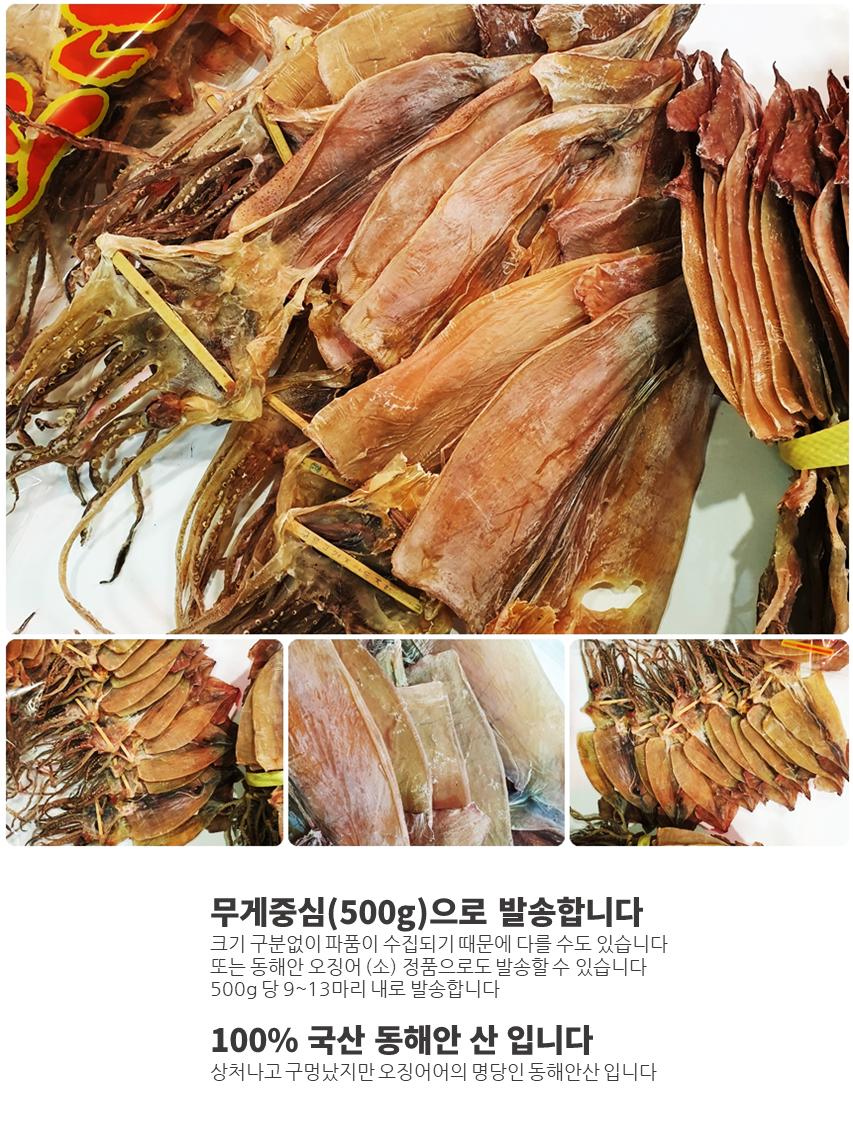 일반파품오징어500-02.png