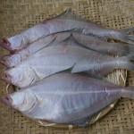 반건조(손질안한) 참가자미 1kg기준 포항 죽도시장 가자미