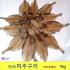 물가자미 미주구리가자미 1kg기준 포항 죽도시장 특미
