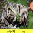 상어 두치 1kg 삶아서 / 상어 수육 /죽도시장 특산품 / 경상도 경조사 필수음식/두투 두툼