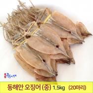 오징어 1축 (中) (20마리) 1,5kg 동해안 건오징어 마른오징어 포항 죽도시장