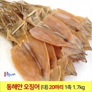 오징어 1축 (大) (20마리) 1.7kg 동해안 건오징어 마른오징어 포항 죽도시장